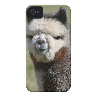 Encima de alpaca gris cercana iPhone 4 Case-Mate protectores