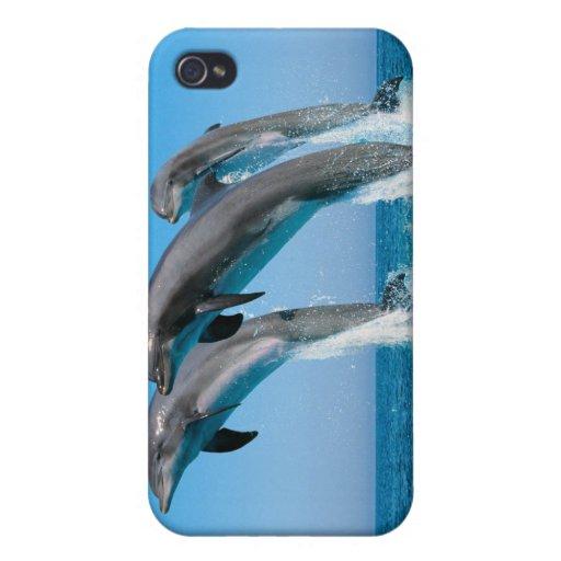 Encima de delfínes ascendentes ascendentes iPhone 4 cárcasas