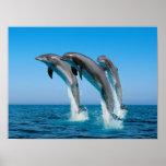 Encima de delfínes ascendentes ascendentes posters