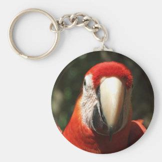 Encima de Macaw cercano y personal del escarlata Llavero Personalizado