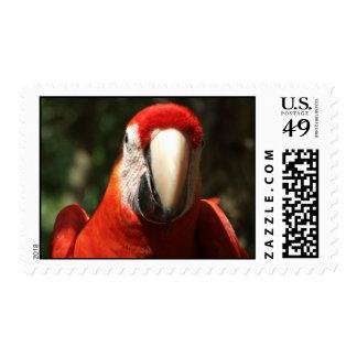 Encima de Macaw cercano y personal del escarlata Sello
