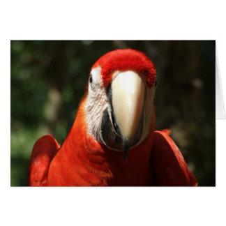 Encima de Macaw cercano y personal del escarlata Tarjeta De Felicitación