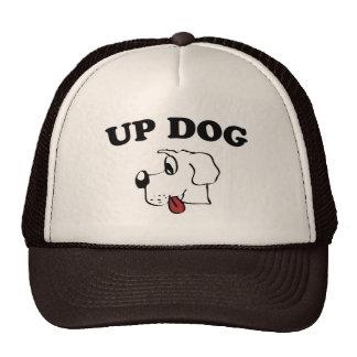 Encima de perro gorras