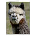 Encima de tarjeta gris cercana de la alpaca