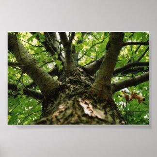 Encima de un árbol póster