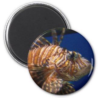 Encima del imán cercano del Lionfish