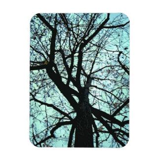 Encima del imán del extracto del árbol