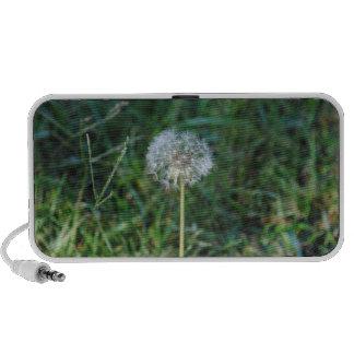 Enclosures dandelion PC speakers