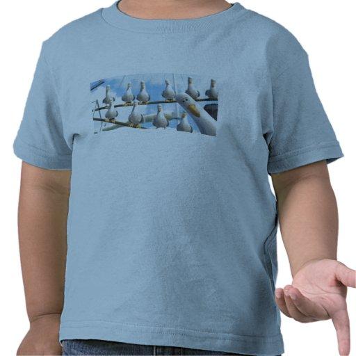 Encontrar las gaviotas de Nemo en cuerdas Camisetas