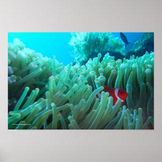 Encontrar Nemo Impresiones