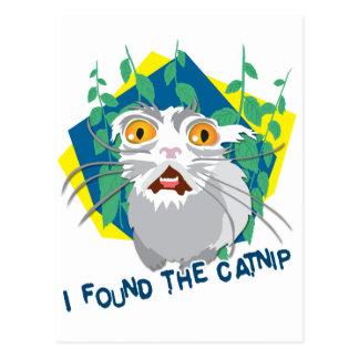 Encontré el catnip tarjetas postales