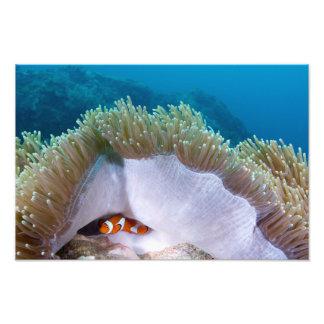 Encontré Nemo Cojinete
