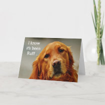 Encouragement/ Get Well Cute Golden Retriever Dog Card