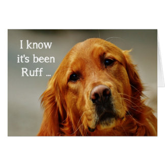 Encouragement/ Get Well Cute Golden Retriever Dog Card