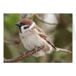 Encouragement/sparrow Card