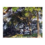 Encuéntreme en el árbol por el mar tarjeta postal