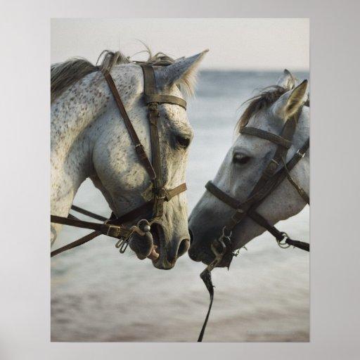 Encuentro de dos caballos poster