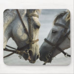 Encuentro de dos caballos tapete de ratón