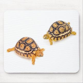 Encuentro de las tortugas alfombrilla de ratones