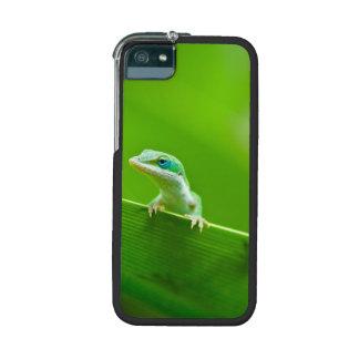 Encuentro verde del lagarto de Anole adorable