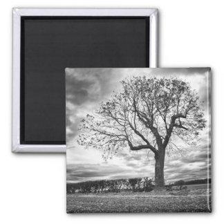 End of Summer Black and white tree fridge magnet