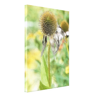 End Of The Season - Coneflower Canvas Print