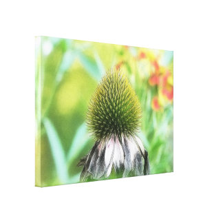 End Of The Season - Coneflower Close Up Stretched Canvas Prints
