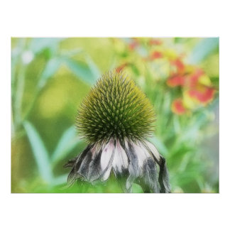 End Of The Season - Coneflower Close Up Posters