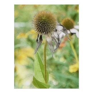 End Of The Season - Coneflower Poster