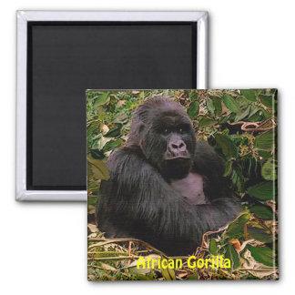 Endangered African Gorilla Great Apes Art Magnet