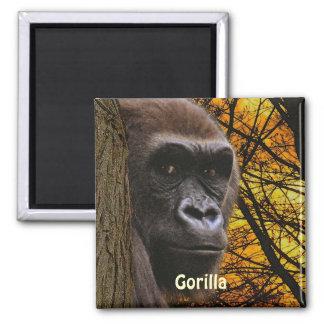 Endangered African Gorilla & Trees Art Magnet