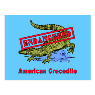 Endangered American Crocodile Products Postcard