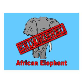 Endangered Animal African Elephant Postcard
