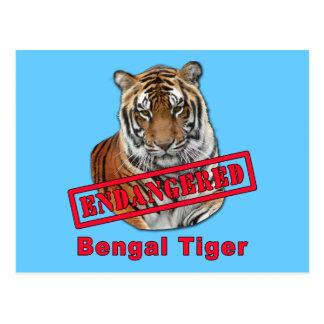 Endangered Bengal Tiger  Products Postcard