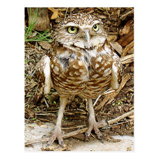 Endangered Burrowing Owl Postcard