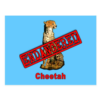 Endangered Cheetah Products Postcard