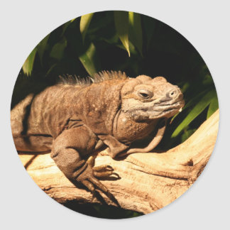 Endangered Jamaican Iguana Classic Round Sticker