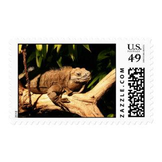 Endangered Jamaican Iguana, Cyclura collei, stamp