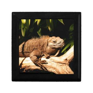 Endangered Jamaican Iguana Gift Box