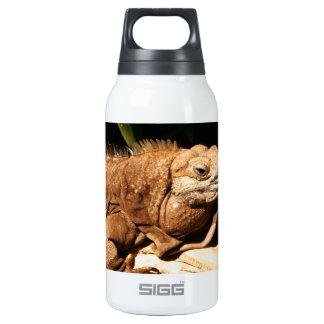 Endangered Jamaican Iguana Insulated Water Bottle