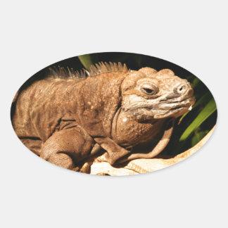 Endangered Jamaican Iguana Oval Sticker
