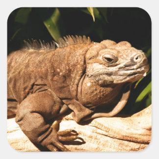 Endangered Jamaican Iguana Square Sticker