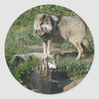 Endangered Mexican Wolf Classic Round Sticker