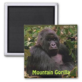 Endangered Mountain Gorilla Great Apes Art Magnet