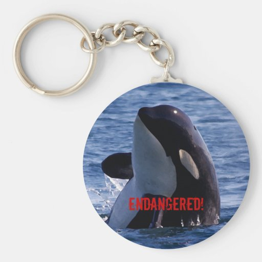 Endangered Orca Keychain