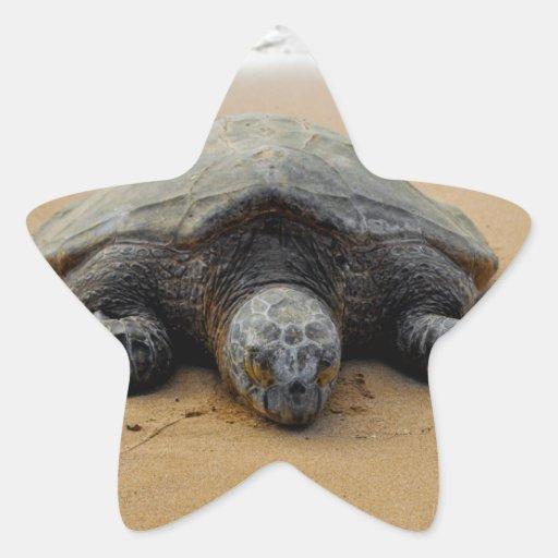 Endangered Sea Turtle Sticker