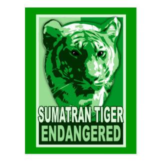 Endangered Sumatran Tiger Pop Art Tshirts Postcard