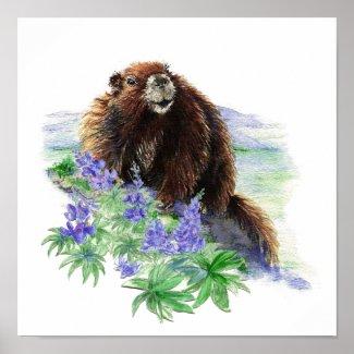 Endangered Vancouver Island Marmot print