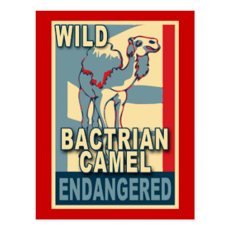 Endangered Wild Bactrian Camel Pop Art Tshirts Postcard