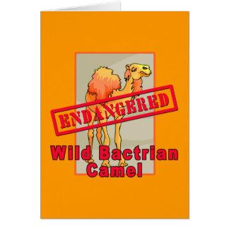 Endangered Wild Bactrian Camel Tshirts Card